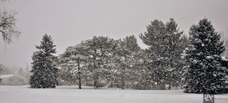 tree line.