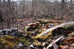 trunkshrooms2